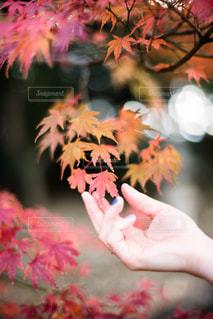 秋に触れてみるの写真・画像素材[1388212]