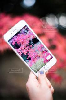 iPhone越しの紅葉の写真・画像素材[1388213]