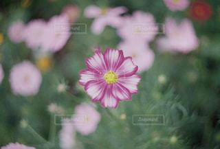 花の写真・画像素材[1582259]