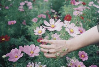 花の写真・画像素材[1582265]