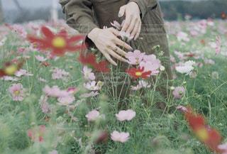 花の写真・画像素材[1582287]
