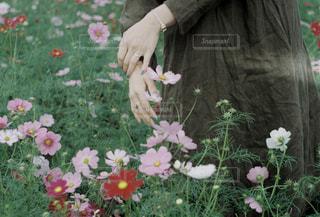 花の写真・画像素材[1582288]