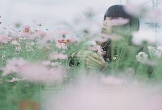 花の写真・画像素材[1582291]
