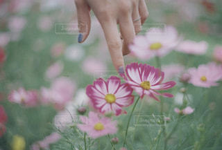 花の写真・画像素材[1582293]