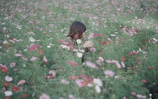 花の写真・画像素材[1582295]