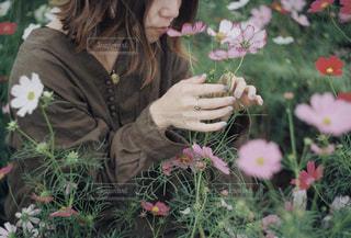 花の写真・画像素材[1582296]