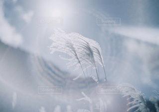 雪の覆われた斜面のぼやけた写真の写真・画像素材[1680823]