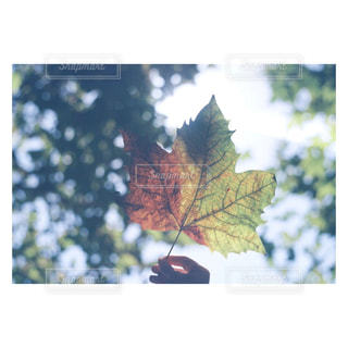 木の花の花瓶の写真・画像素材[1680838]