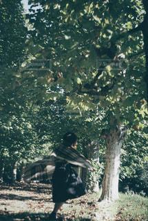 森の人々 のグループの写真・画像素材[1680839]
