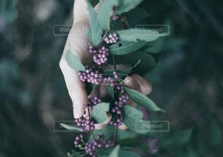 近くの花のアップの写真・画像素材[1680841]