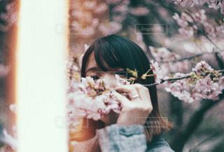 桜と女の子の写真・画像素材[1832155]