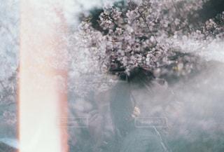 春うららの写真・画像素材[1832199]