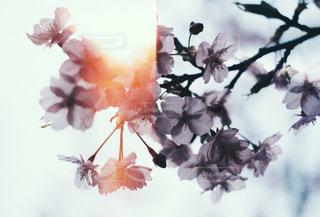 春の知らせの写真・画像素材[1832201]