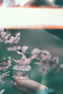 花びら集めての写真・画像素材[1832204]