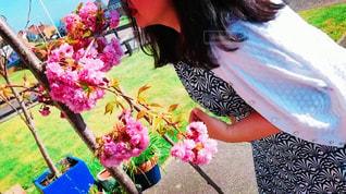桜が満開の写真・画像素材[1198845]