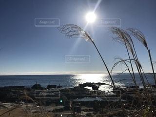 眩しい太陽の写真・画像素材[1199601]