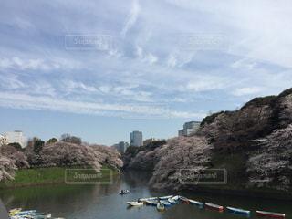桜が満開の千鳥ヶ淵の写真・画像素材[1199361]