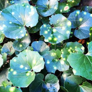 庭の植物の写真・画像素材[1199229]