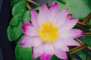近くの花のアップの写真・画像素材[1199576]