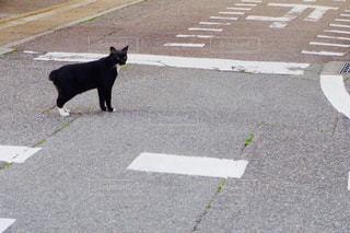 道路を歩く犬の写真・画像素材[1199581]