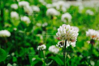 近くの花のアップの写真・画像素材[1199584]