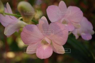 植物にピンクの花の写真・画像素材[1199618]