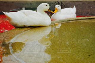 食べ物のかけらの上に座っている鳥の写真・画像素材[1199623]