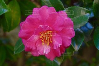 近くの花のアップの写真・画像素材[1199651]
