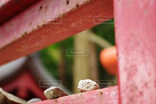近くに食品のの写真・画像素材[1199654]