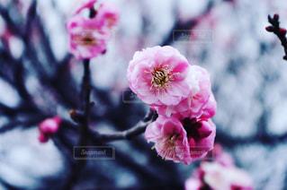 近くの花のアップの写真・画像素材[1199657]