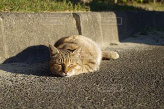コンクリートの表面に横になっている猫の写真・画像素材[1199660]