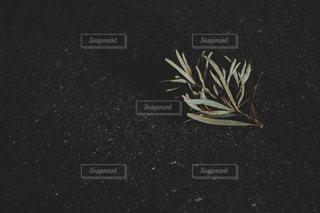 近くの花のアップの写真・画像素材[1199694]
