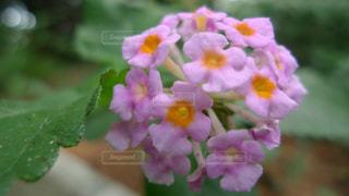 近くの花のアップの写真・画像素材[1199718]