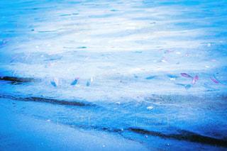 水体を泳ぐ人たちのグループの写真・画像素材[1268148]