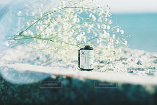海とフィルムとかすみ草。の写真・画像素材[1200117]