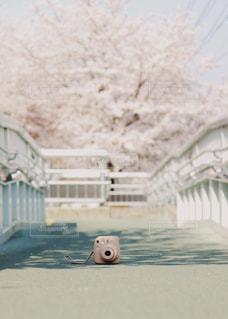桜とチェキ。の写真・画像素材[1200125]