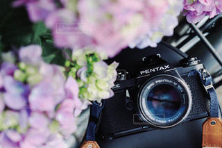 紫陽花とカメラ。の写真・画像素材[1259711]