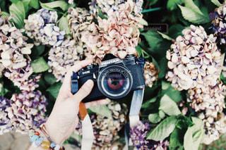 枯れても美しい花。の写真・画像素材[1282919]
