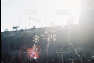 秋の気配の写真・画像素材[2434709]