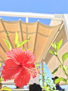 テーブルの上のピンクの花で一杯の花瓶の写真・画像素材[1201573]