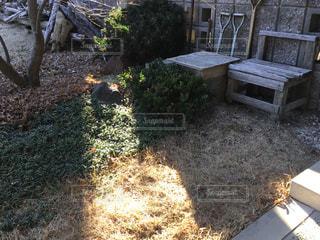 庭の写真・画像素材[2862336]