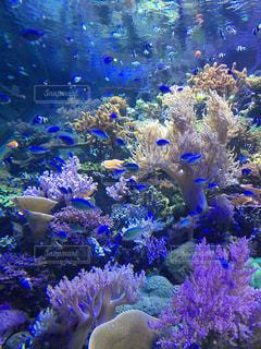 サンゴの水中ビューの写真・画像素材[1200834]