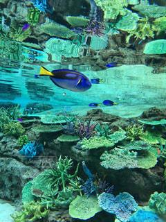 背景の水の庭の写真・画像素材[1200835]