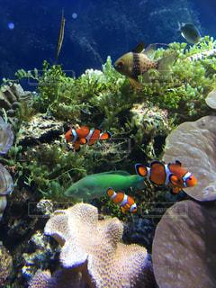 水の中の魚の群れの写真・画像素材[1200837]