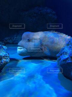 青い水の中を泳ぐ魚たちの写真・画像素材[1200838]