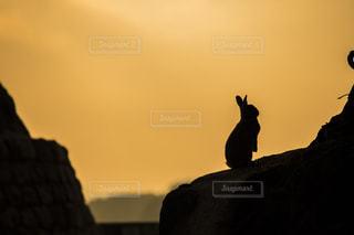 うさぎ島の朝の写真・画像素材[1207312]