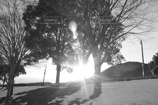 冬の太陽の写真・画像素材[1201298]