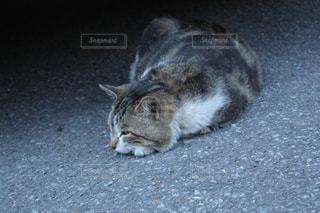 地面に横になっている猫の写真・画像素材[1755110]