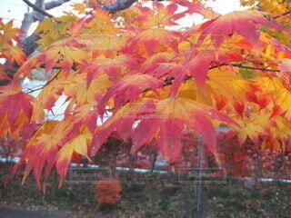 彩づく紅葉の写真・画像素材[4863579]