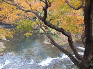 秋の川辺の写真・画像素材[4863580]